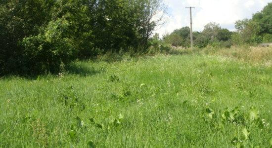 Land plots in with. Derevyanki, Kiev region, Vasilkovsky district