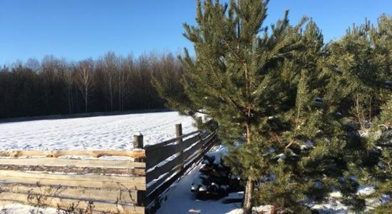 Земельна ділянка в с. Нежиловичі, Київська область, Макарівськийрайон