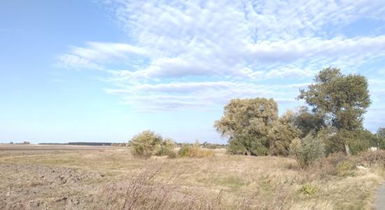 Земельні  ділянки в селі Погреби Васильківського району