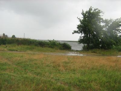 Land on the banks of the Dnieper, Grape, Kherson region