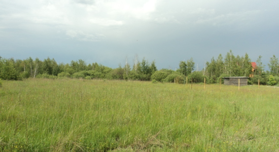 Земельный участок в пгт. Бабинцы Бородянского района